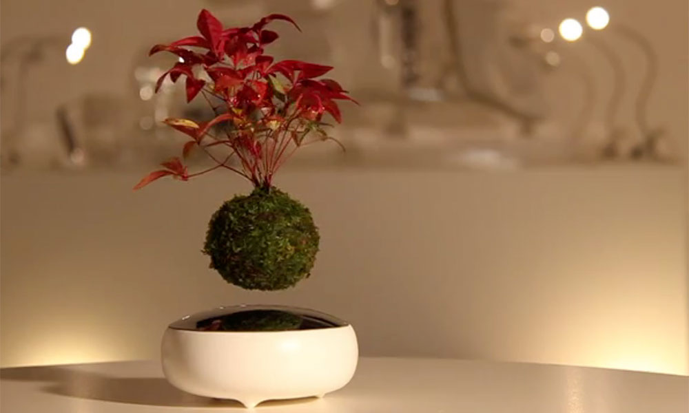 Air bonsai le pot de fleurs en l vitation - Pot de fleur levitation ...